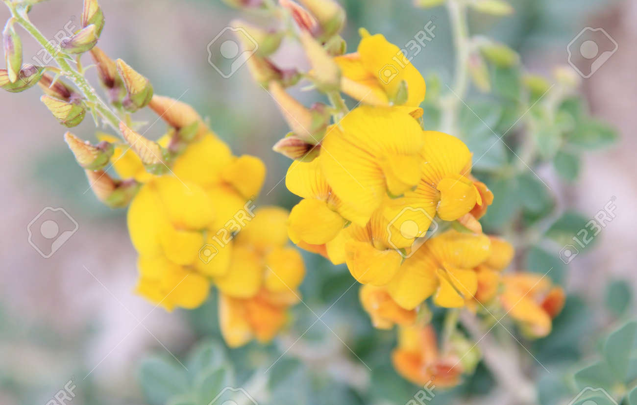 Yellow Rocket Wild Flowers From Africa Inspirational Beauty