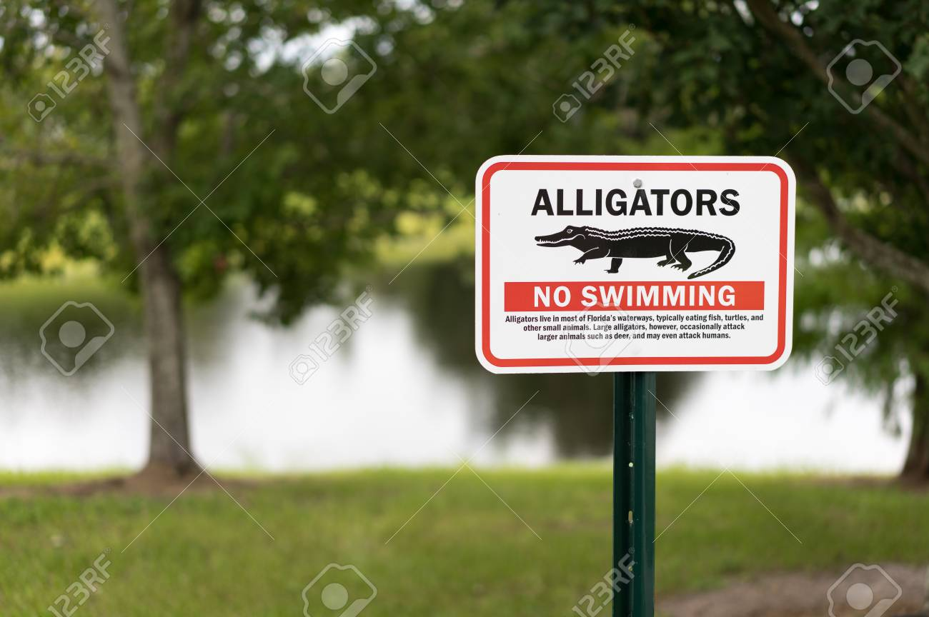 alligator warning sign in florida for awareness of imminent danger