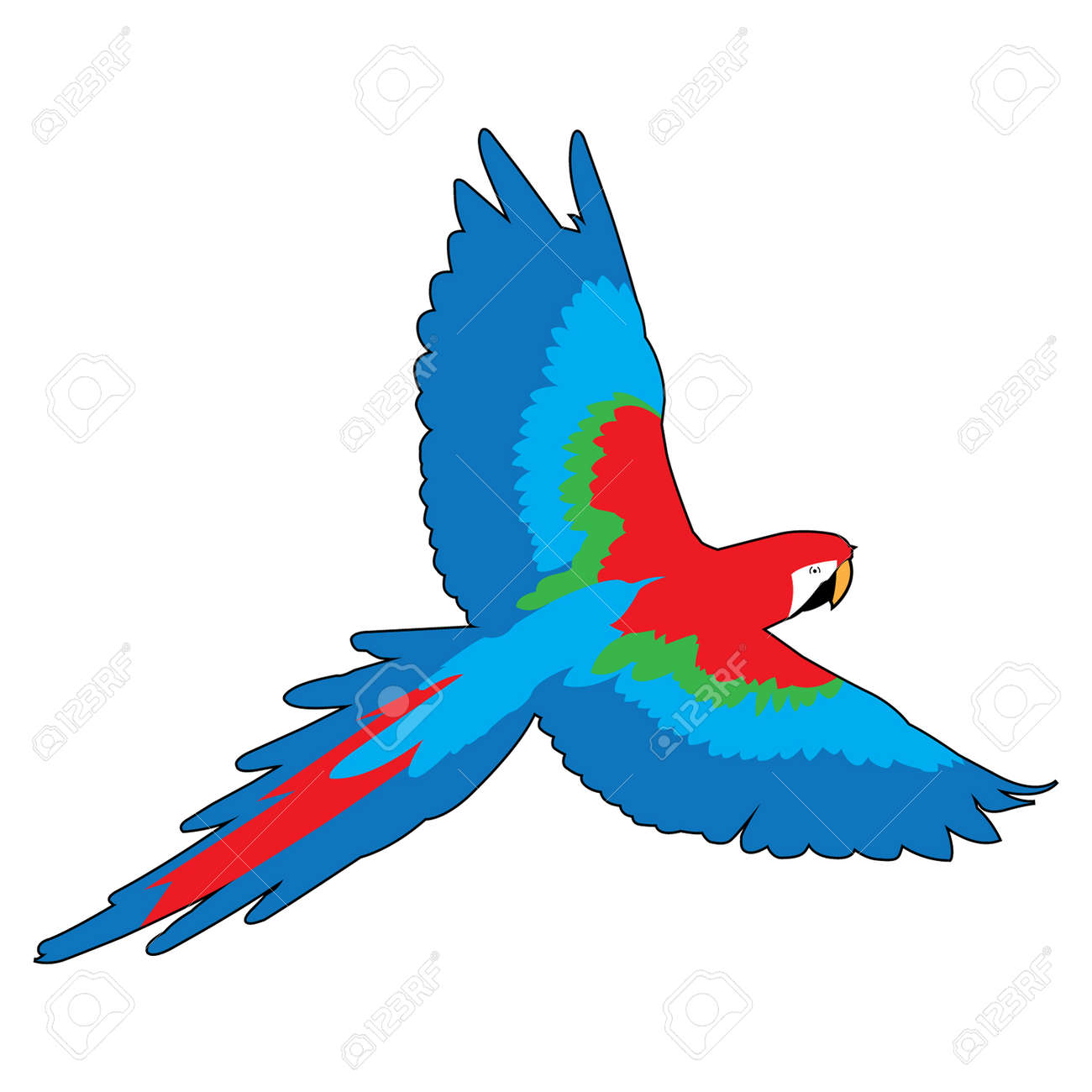 flying macaw parrot vector graphic royalty free cliparts vectors rh 123rf com macaw clipart macaw bird clipart