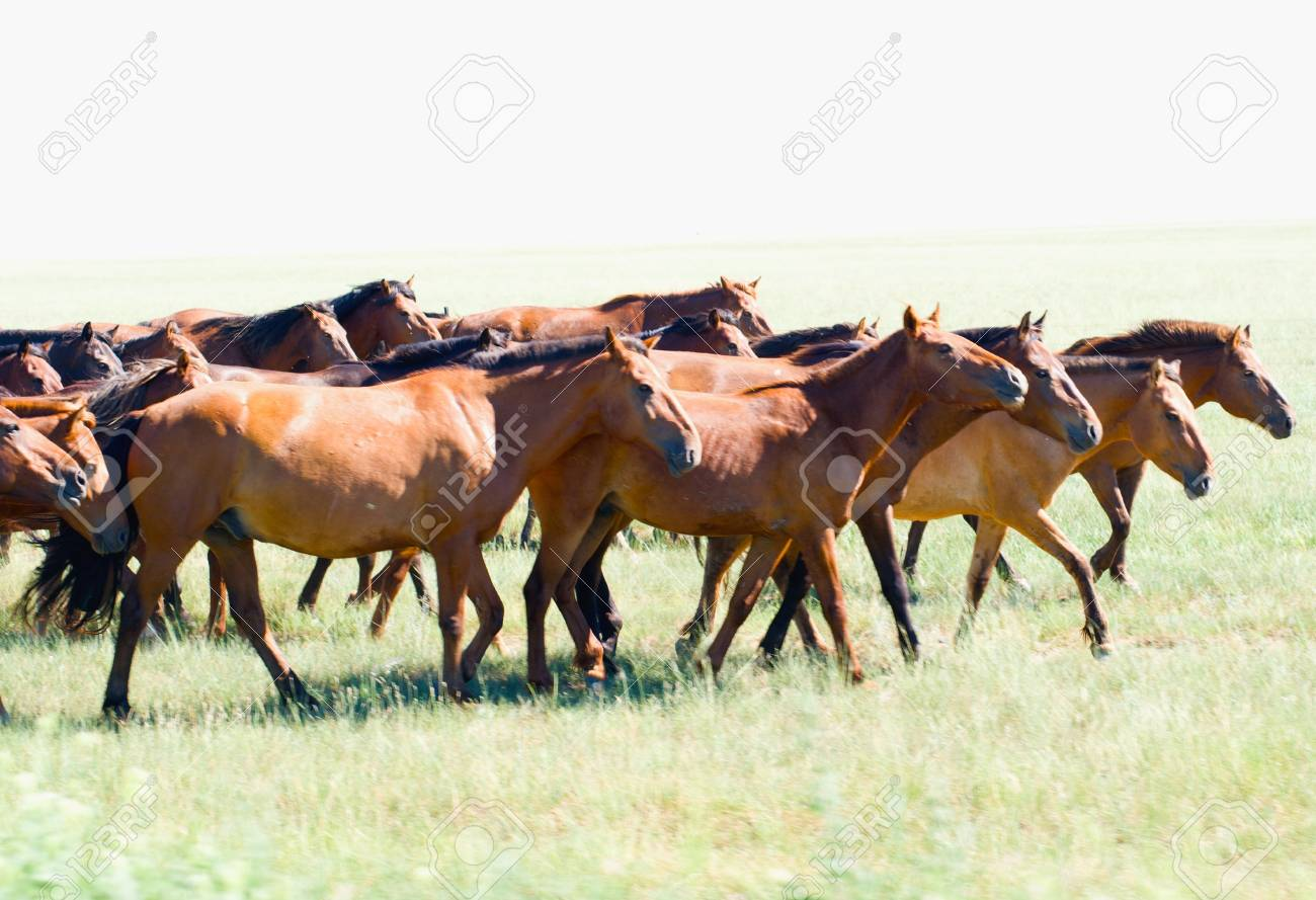 Herd Of Wild Horses Running On The Field Stock Photo Picture And Royalty Free Image Image 17728413