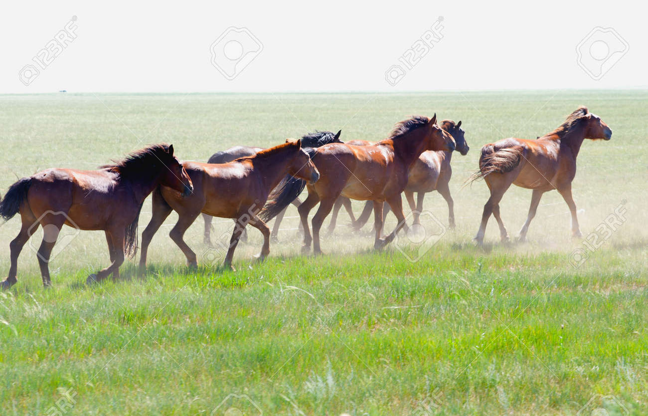 Herd Of Wild Horses Running On The Field Stock Photo Picture And Royalty Free Image Image 19019933