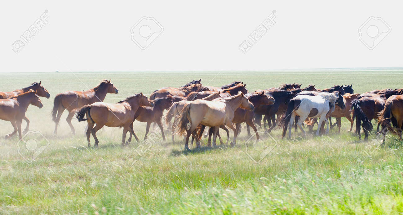 Herd Of Wild Horses Running On The Field Stock Photo Picture And Royalty Free Image Image 19019929