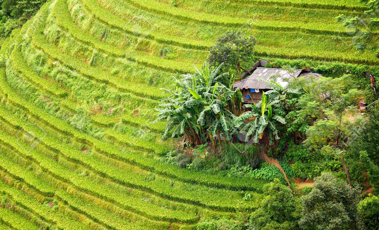 Cerrar Ladera Terrazas Con Pequeñas Casas En La Cosecha En Los Campos De Plátanos En Verano La Paz Real Para El Campo De Vietnam