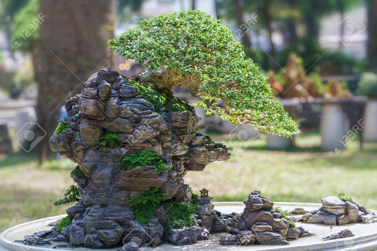 Bonsai And Penjing With Miniature In A Tray Stock Photo Picture And Royalty Free Image Image 71560579