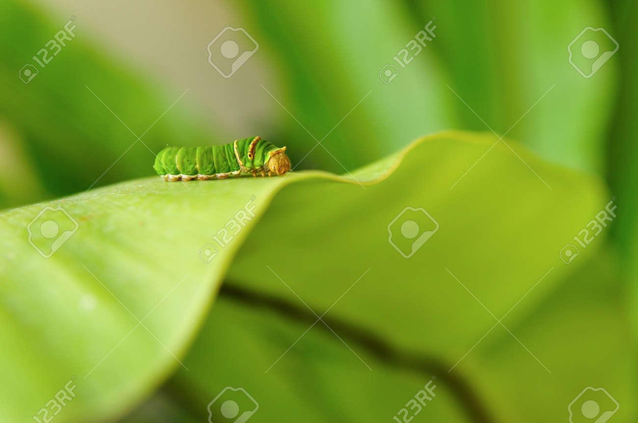 Caterpillar on fern leaf - 10979895