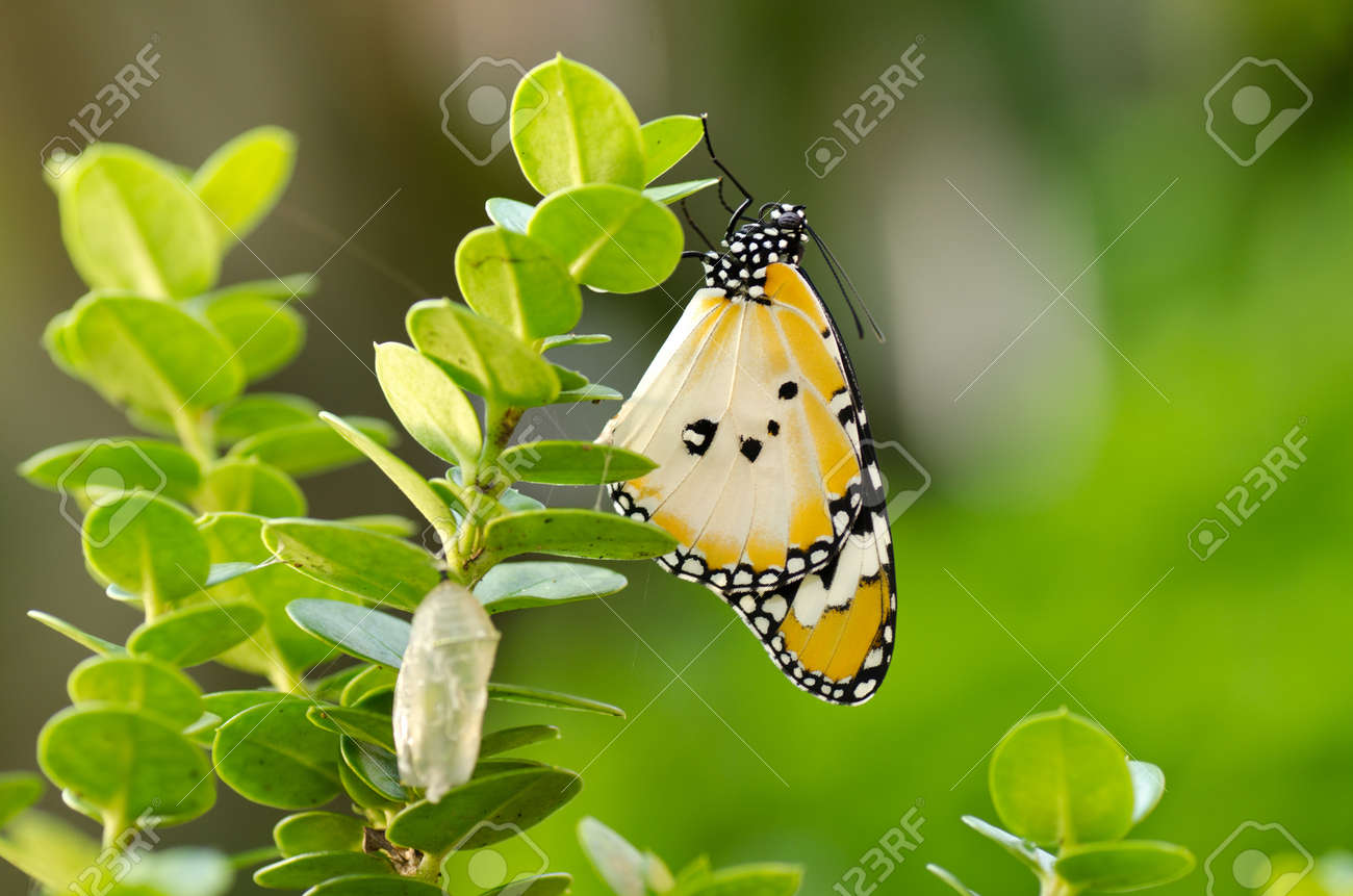 newly transformed butterfly - 11311733