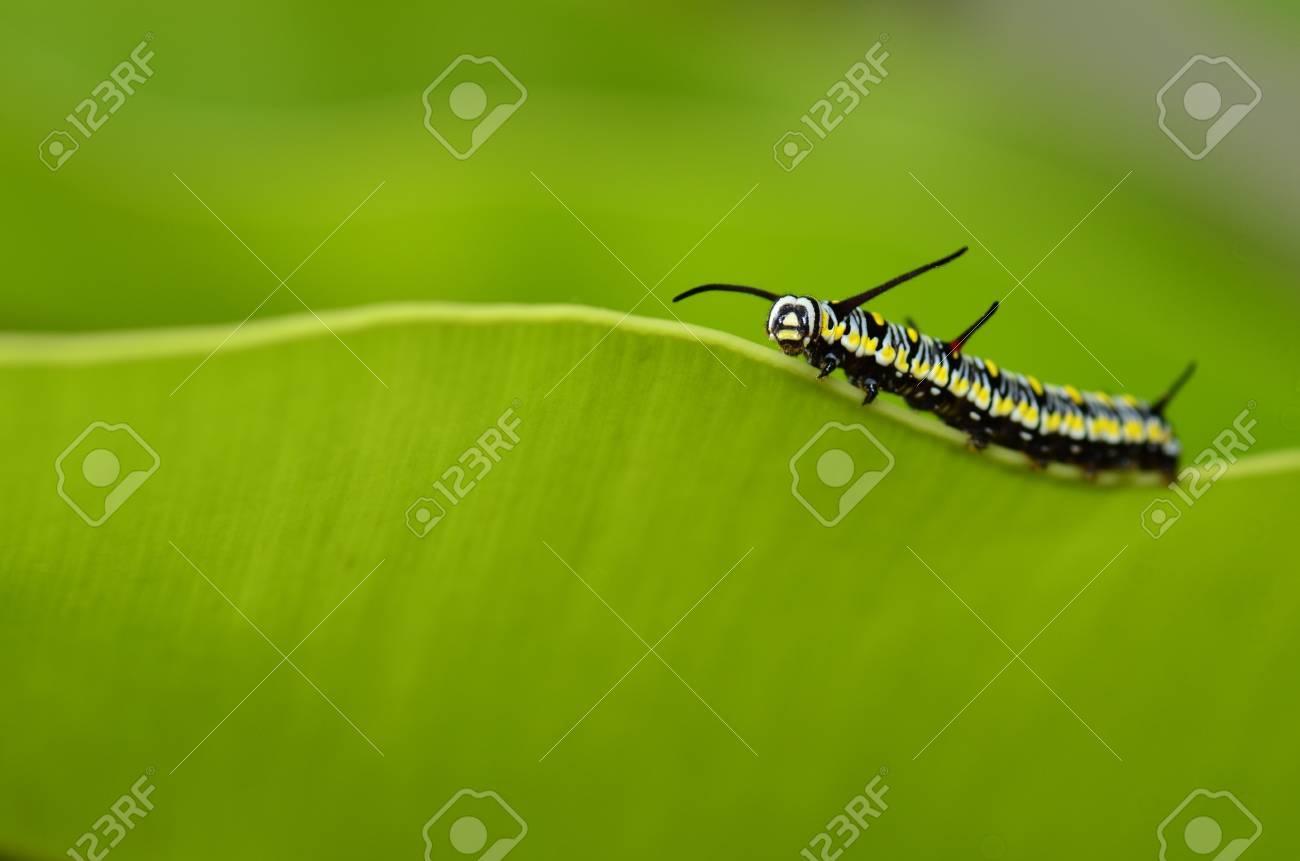 Caterpillar on green fern leaf - 17038473