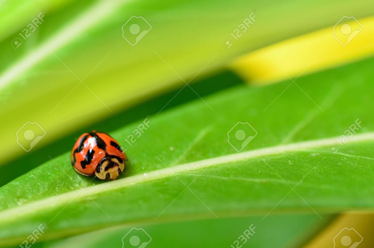 ladybug on leaf - 11694984