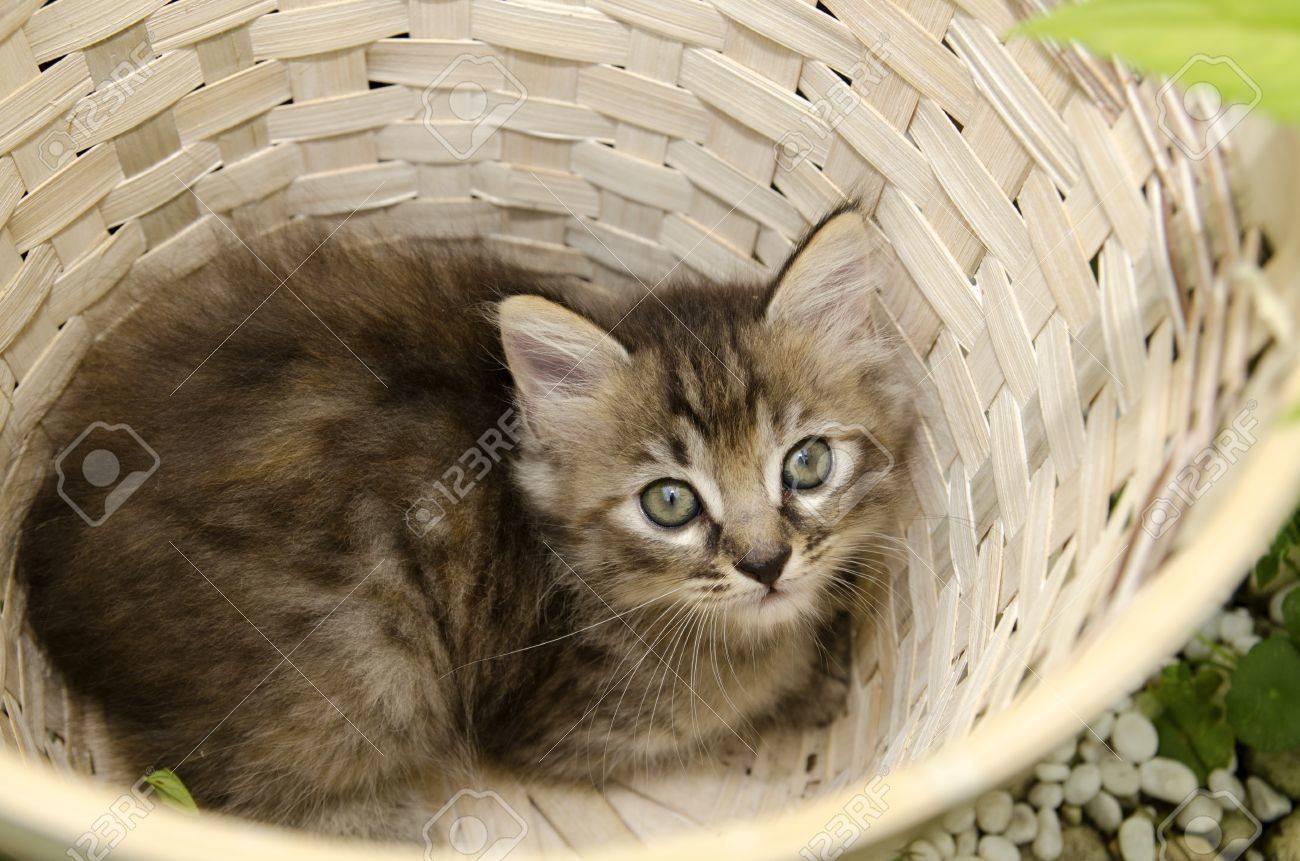 cute kitten in basket - 14836516