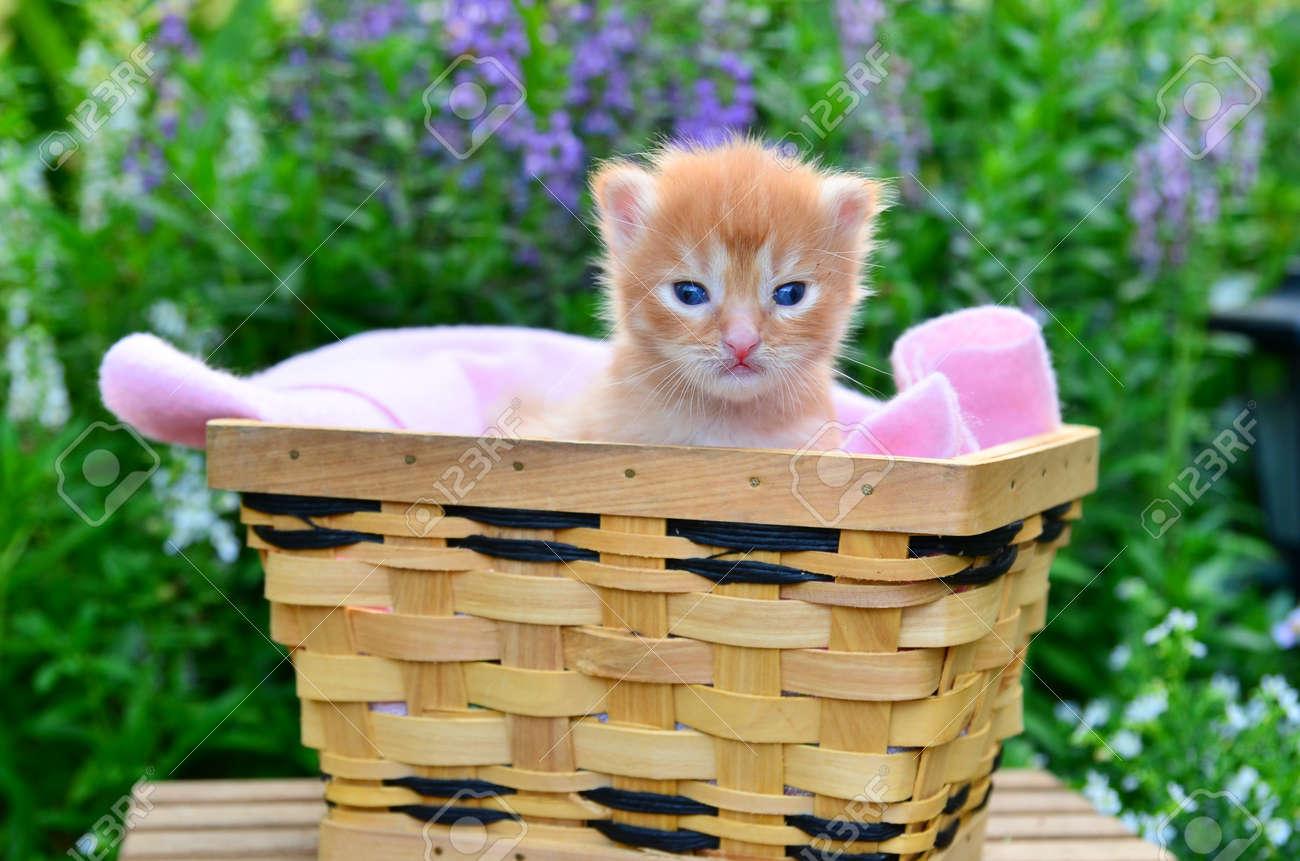 cute kitten in basket - 14836527