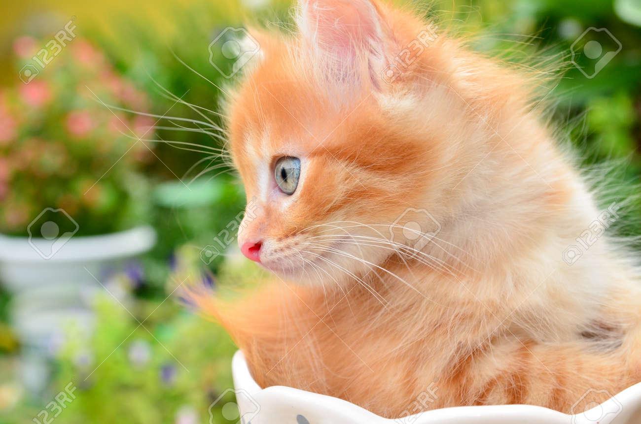 cute kitten in pot - 14836532
