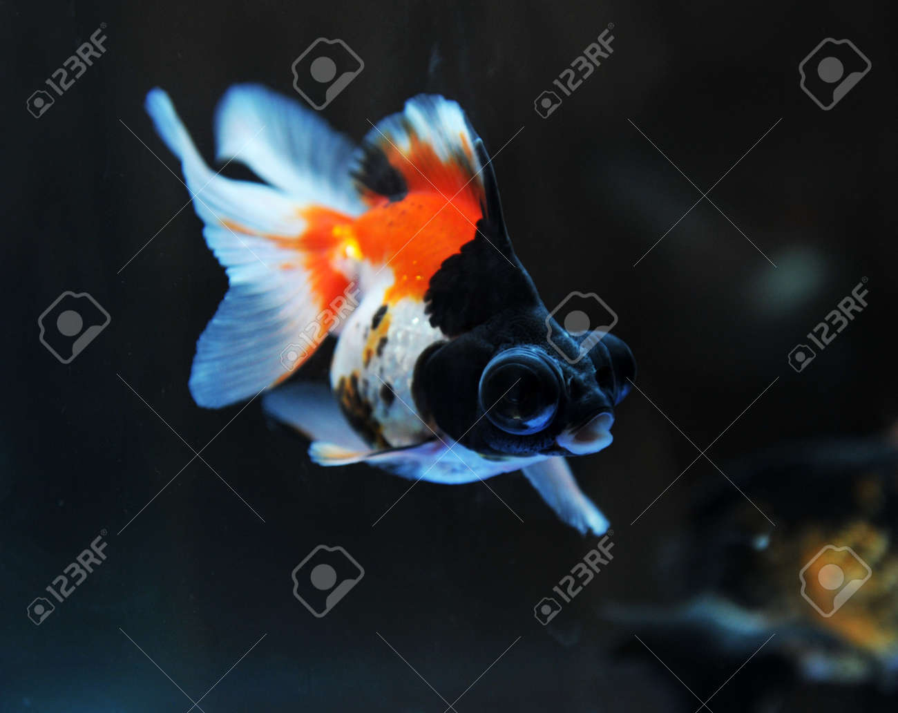 funny goldfish in fishbowl with funny action. Stock Photo - 13647426