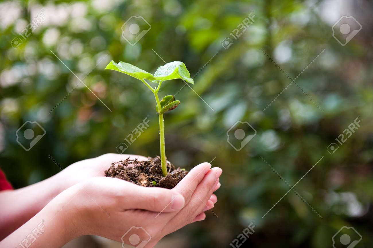 plant in the hand on green background Stock Photo - 14177161