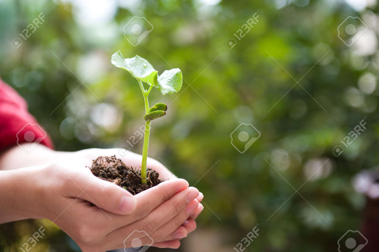 plant in the hand on green background Stock Photo - 14176645