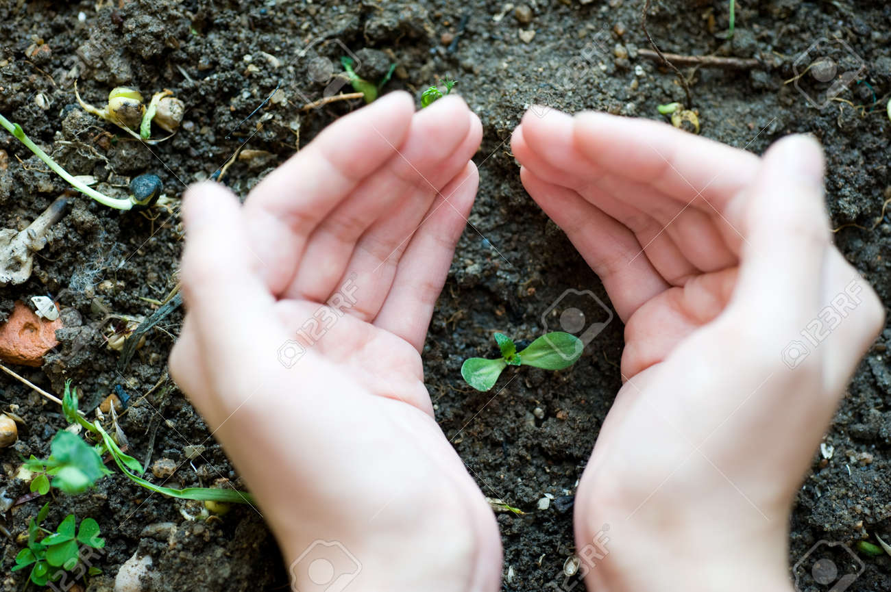 new sprout in girl's hand. Stock Photo - 14177610