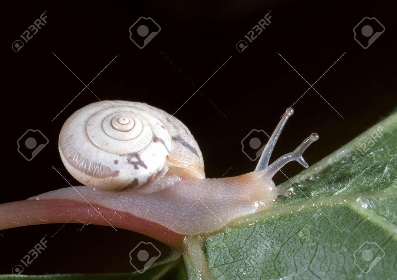 寄生 カタツムリ 虫 の