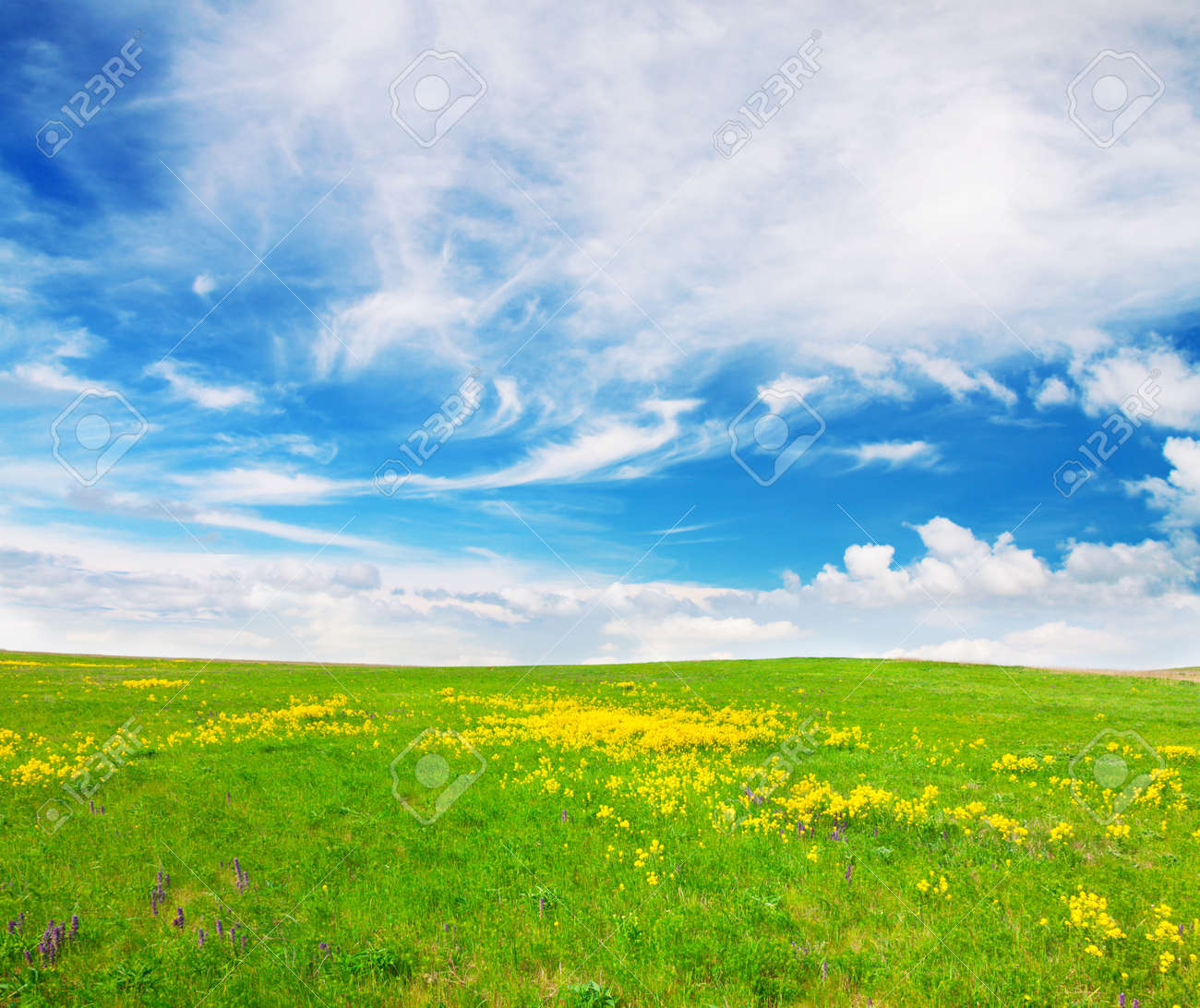 Green field with flowers under blue cloudy sky Stock Photo - 8645769