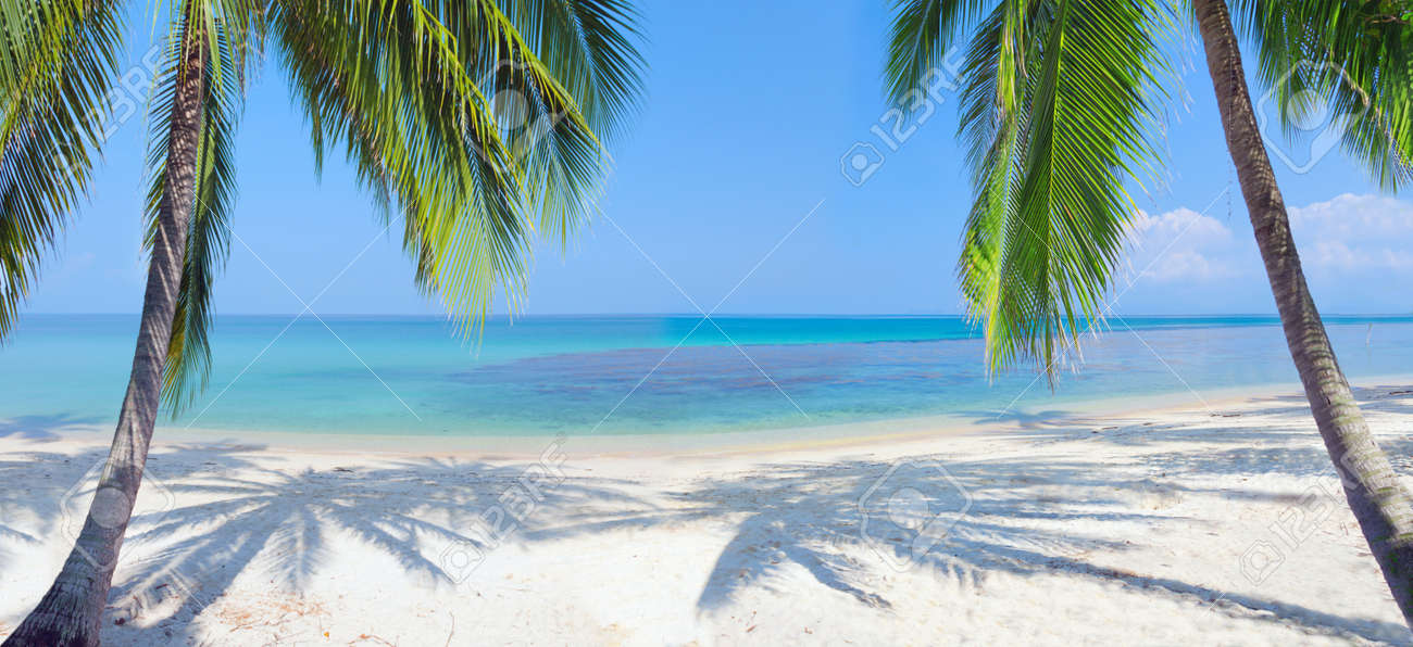 panoramic tropical beach with coconut palm Stock Photo - 9372490