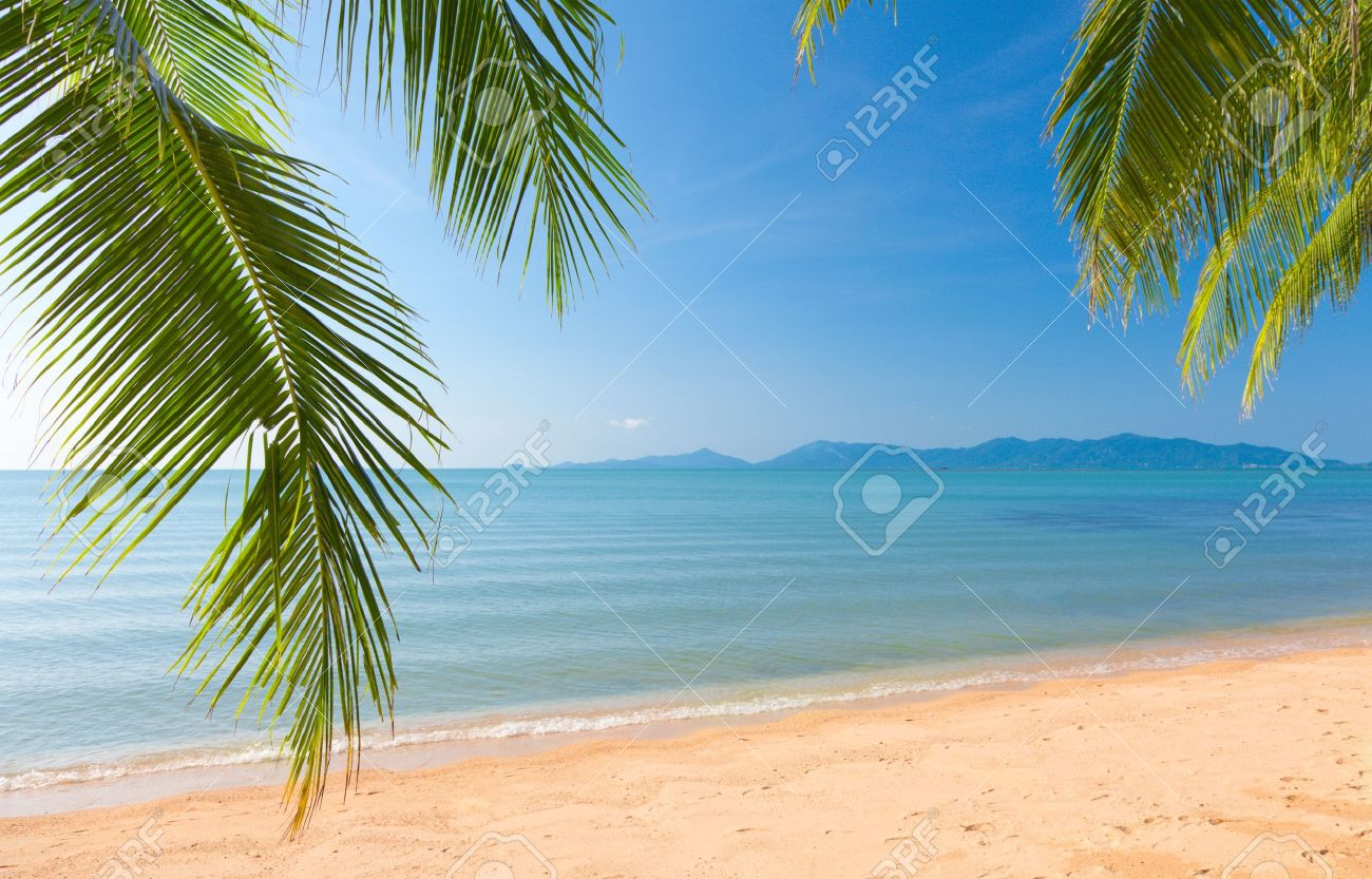 Palm leaf and tropical beach Stock Photo - 11870695