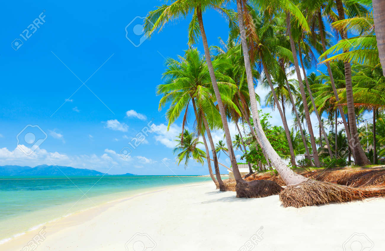 tropical beach with coconut palm trees. Koh Samui, Thailand - 12007620