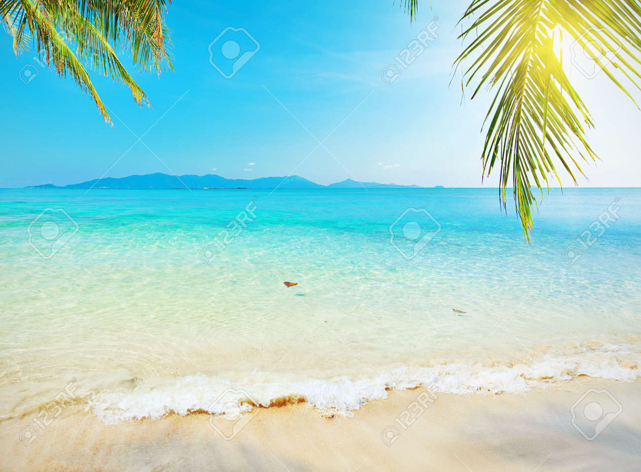 Palm leaf and tropical beach - 12007605