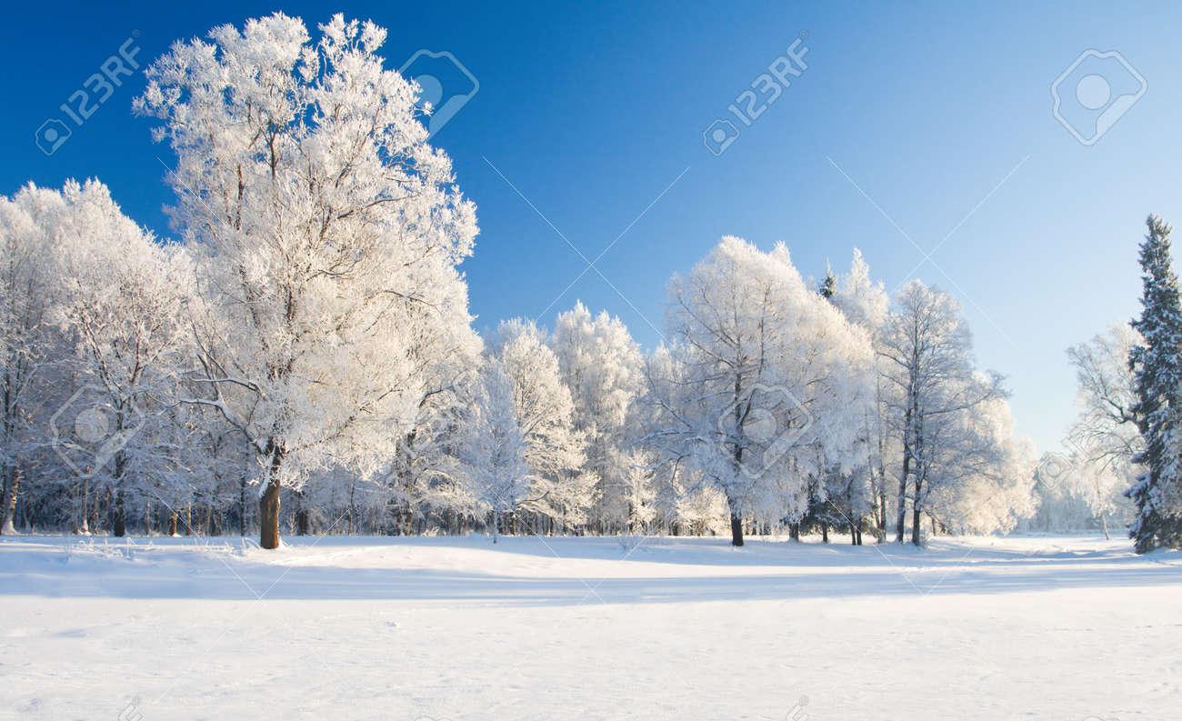 Winter park in snow - 16443305