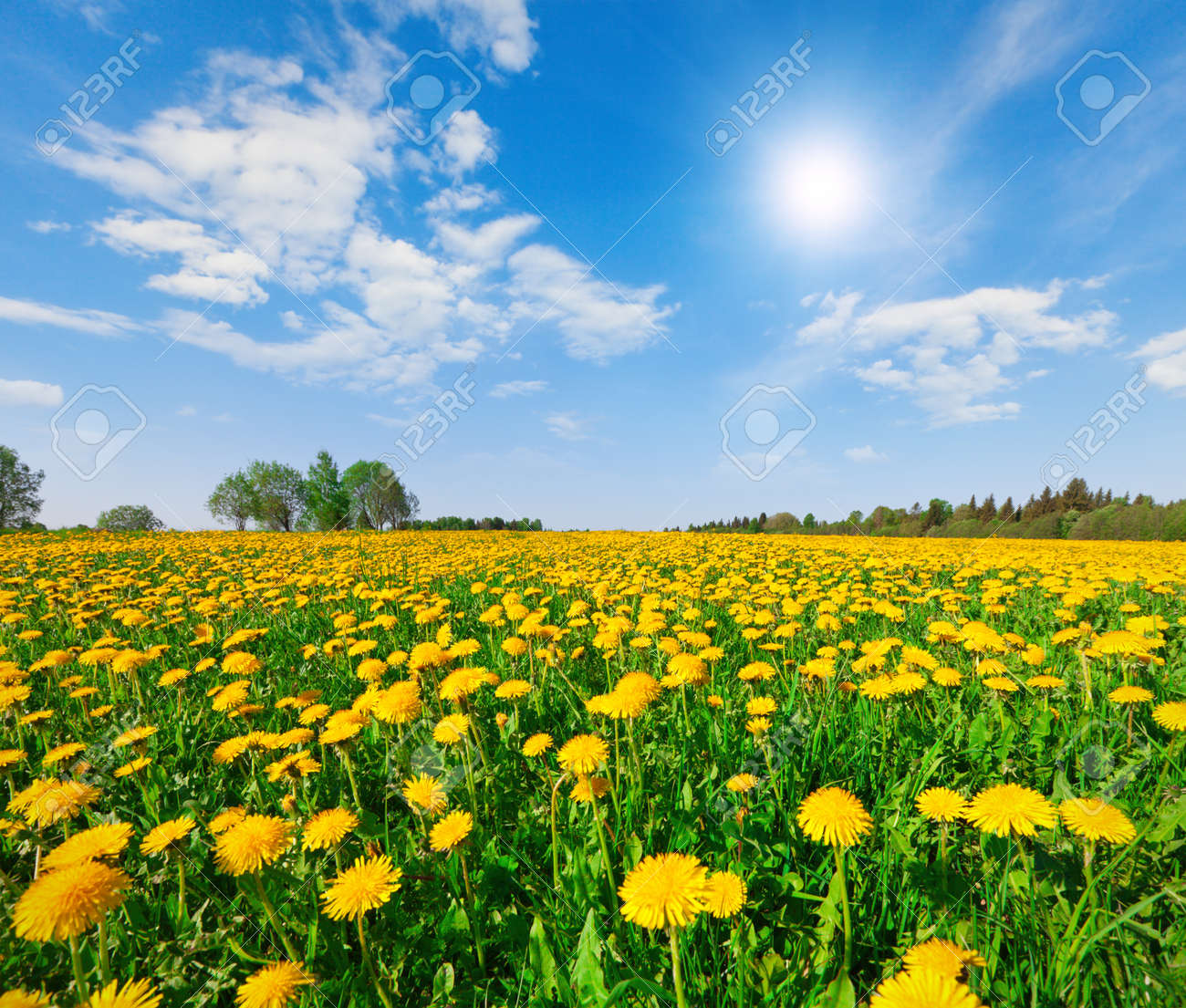 Yellow flowers hill under blue cloudy sky - 17675938