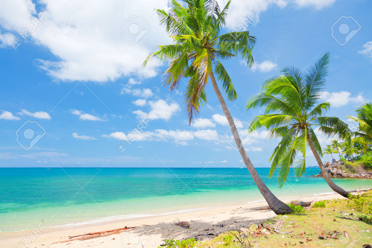 tropical beach with coconut palm - 17933049