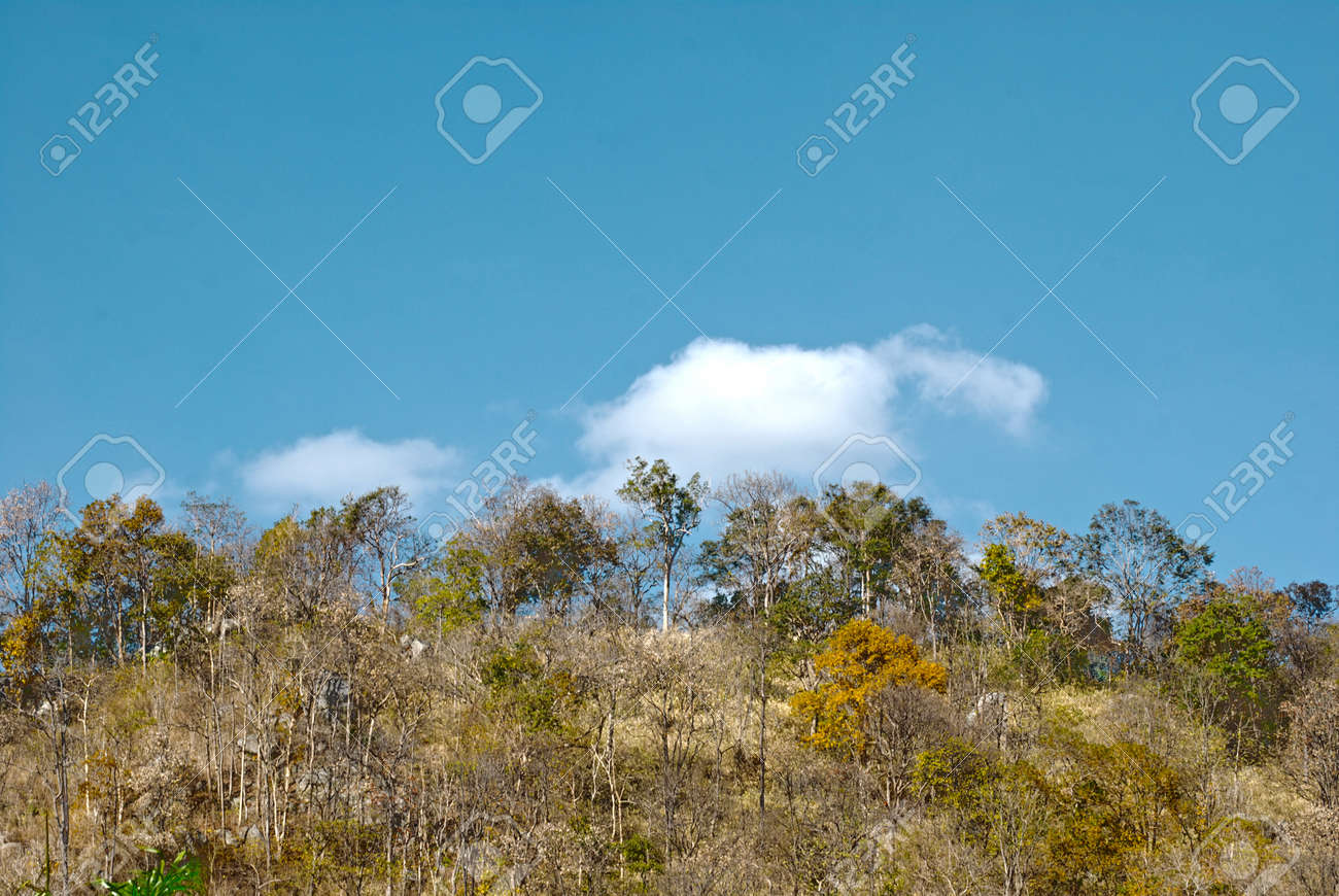 The tree in mountain and blue sky Stock Photo - 13568636