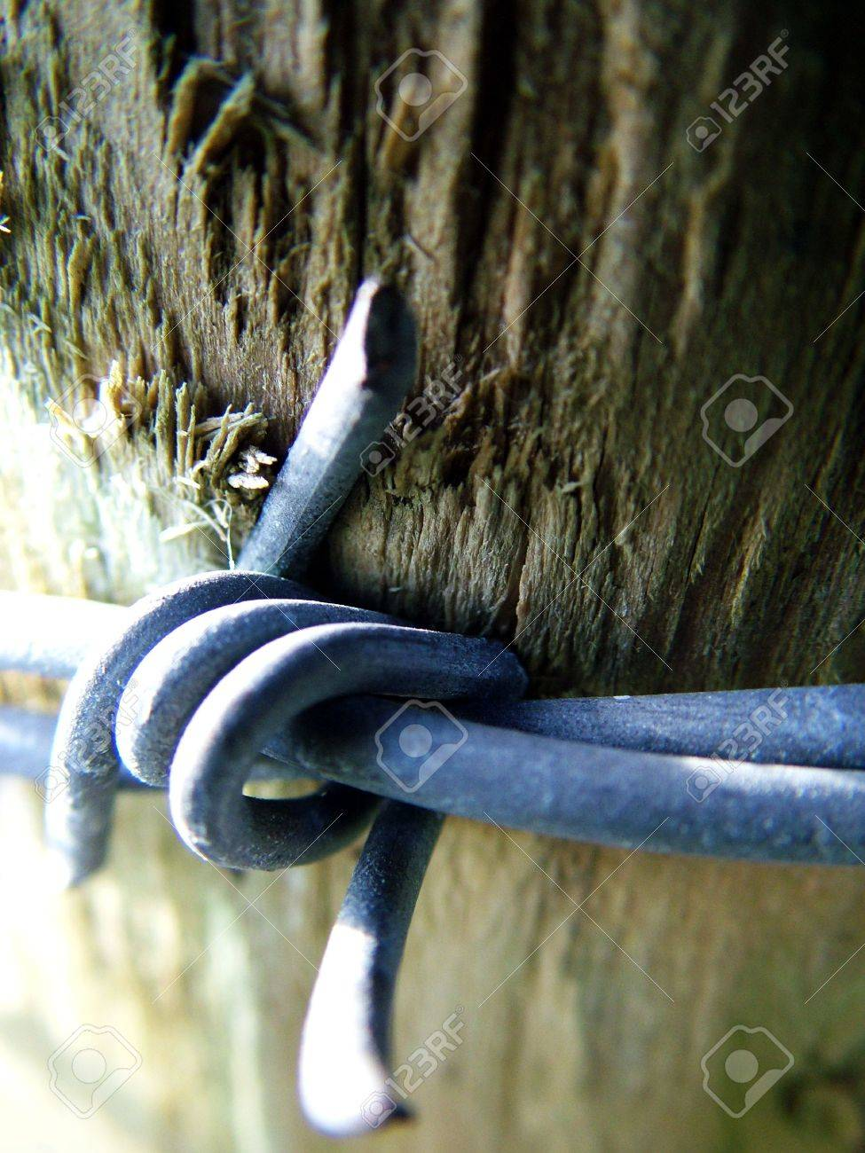 Barbed wire Stock Photo - 368189