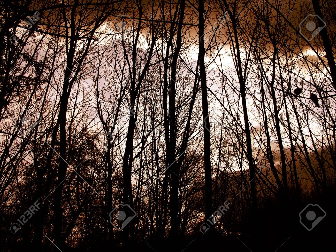 Trees looking up Stock Photo - 380219