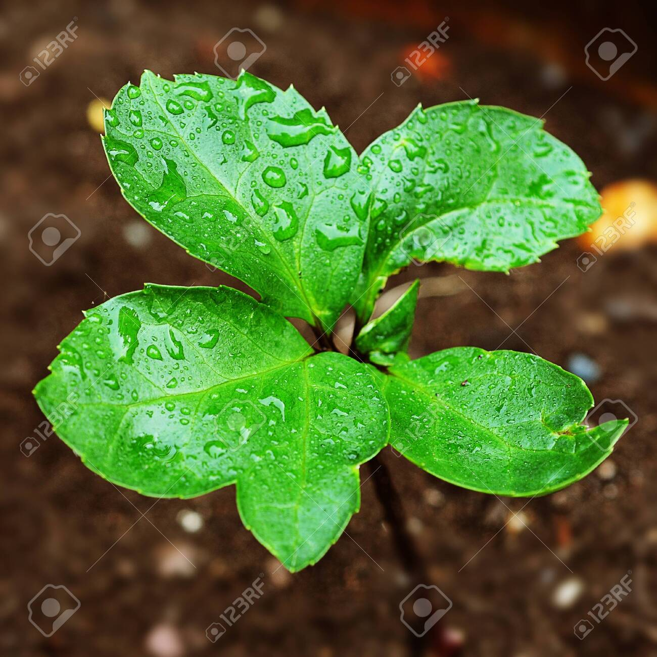 Green leaves Stock Photo - 9484713