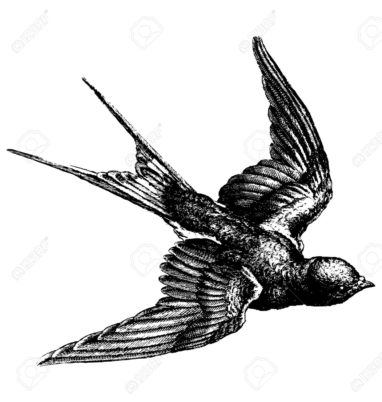 Vector hand drawing sketch of a flying bird Stock Vector - 37115191