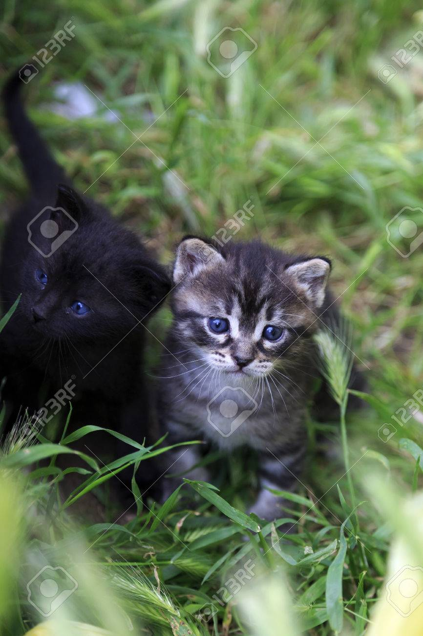 Two newborn kittens grey striped and black baby cats in grass stock stock photo two newborn kittens grey striped and black baby cats in grass thecheapjerseys Images