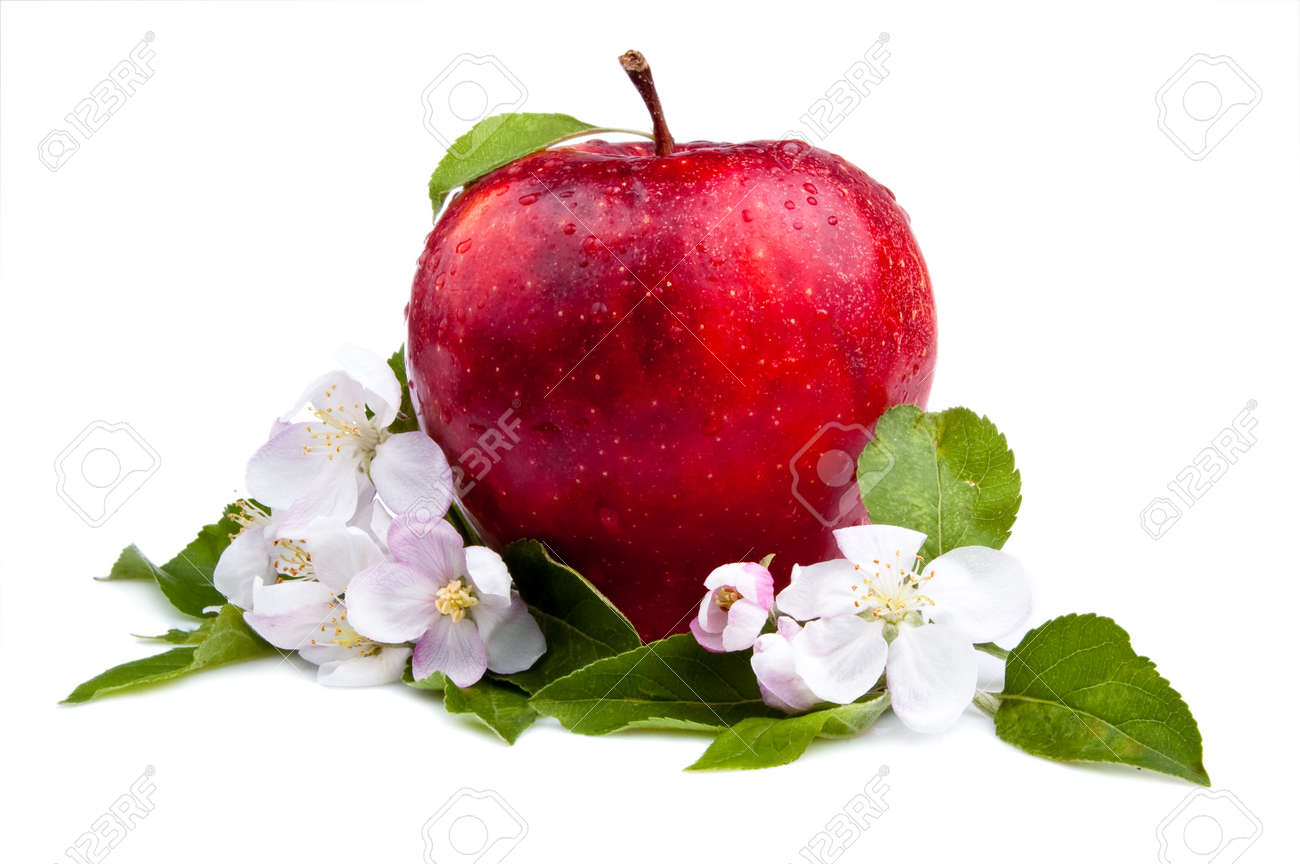 One Juicy Red Apple and flowers on a white background Stock Photo - 13870176