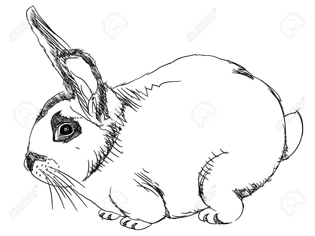 Rabbit Face Outline