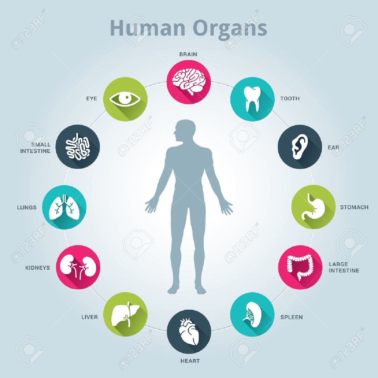 Medical Human Organs Icon Set With Body In The Middle Royalty Free ...
