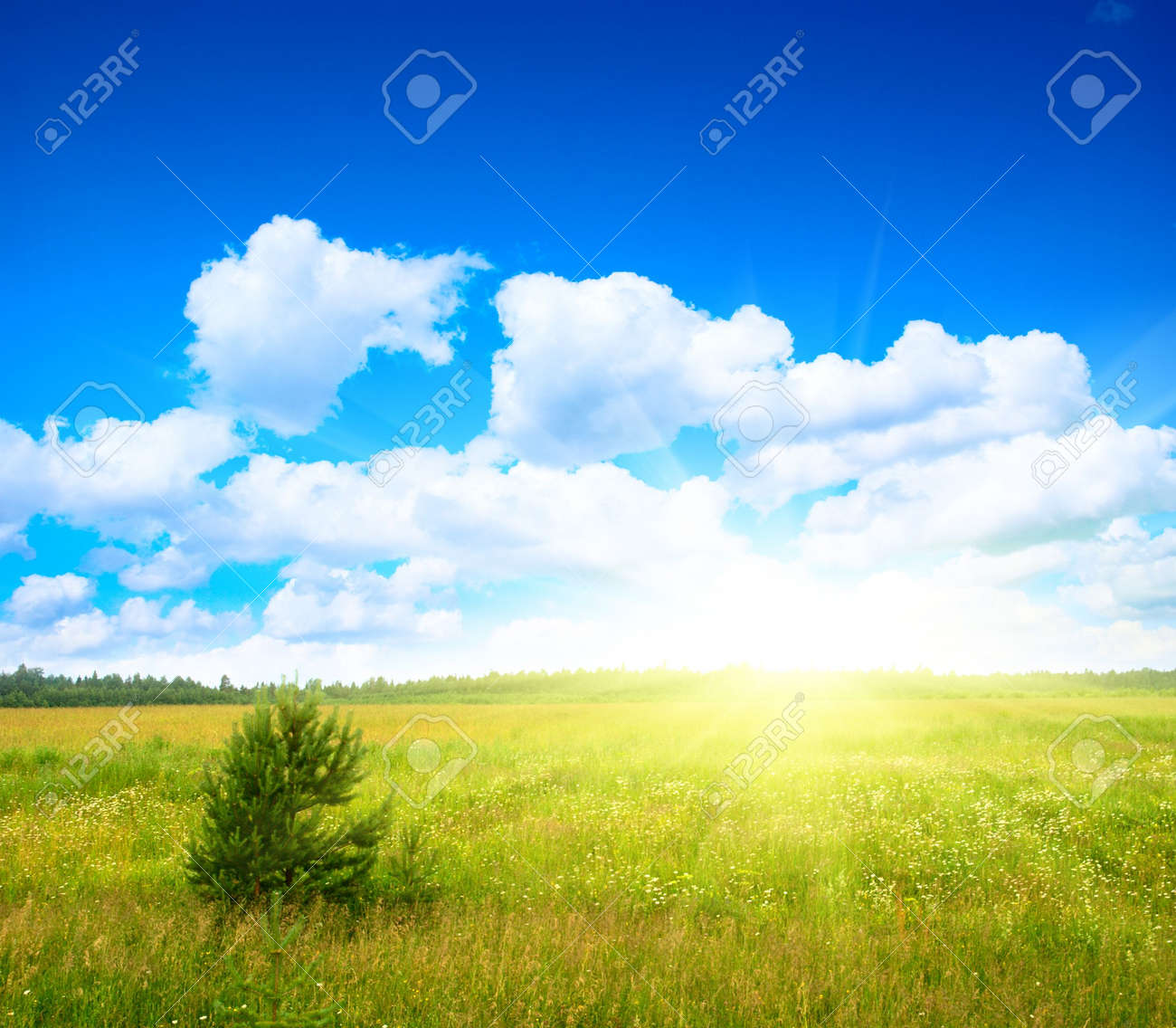 field of daisies and perfect sky Stock Photo - 3876916
