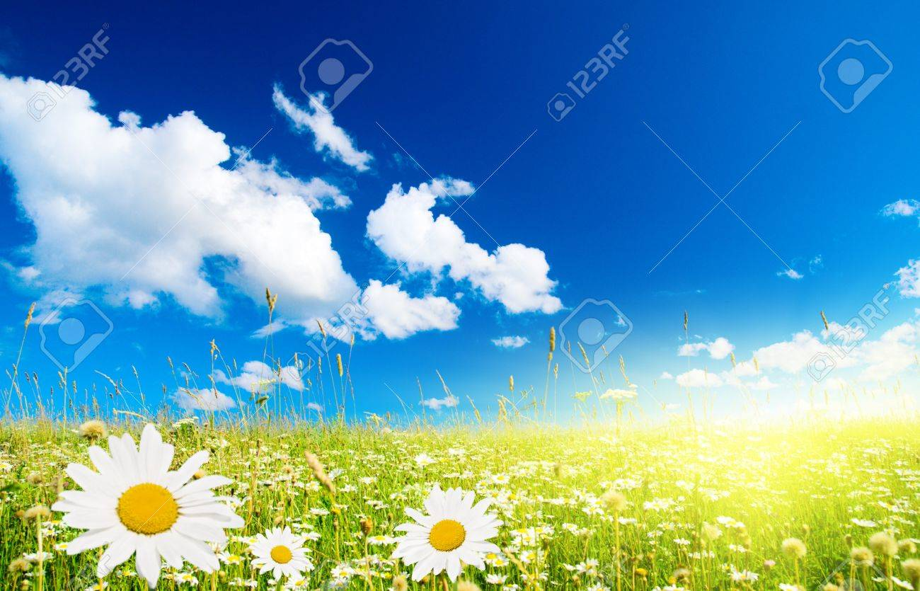 field of daisies and perfect sky Stock Photo - 4007147