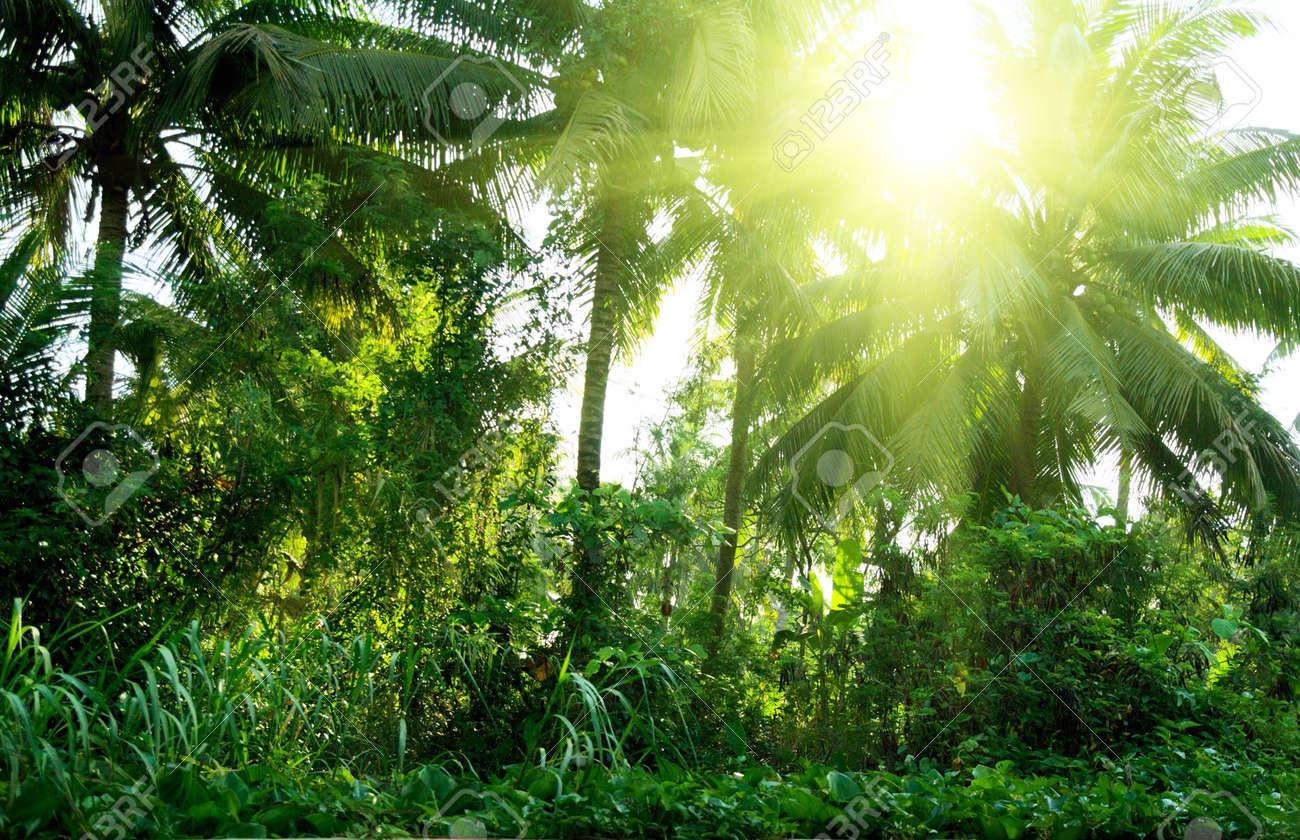 jungle of Thailand Stock Photo - 4466417