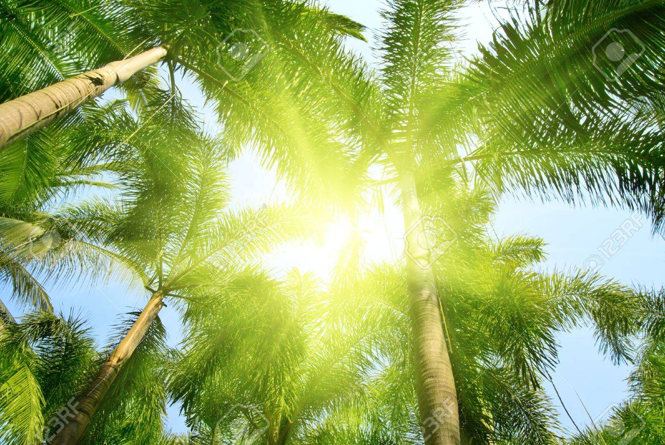 palms in jungle of Thailand Stock Photo - 4502496