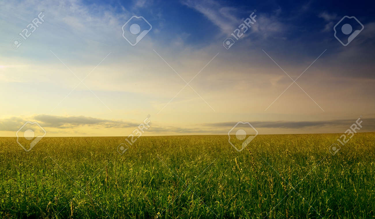 field of summer grass and sunset Stock Photo - 4884714