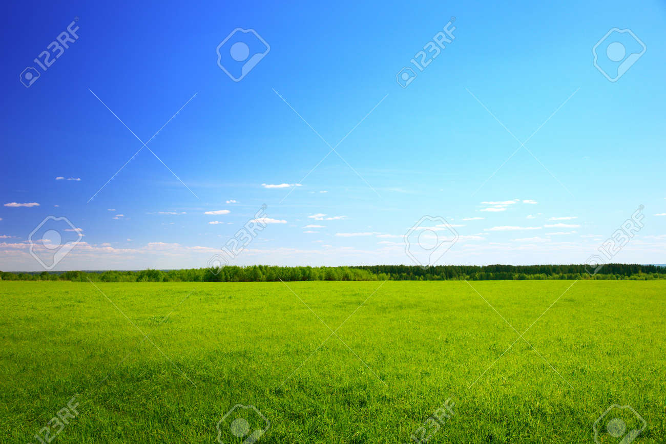 sunny spring day and green field Stock Photo - 5006056