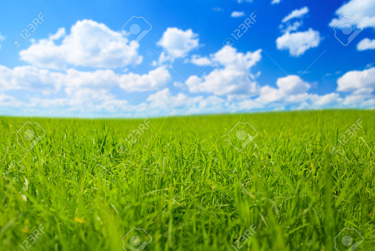 field of spring grass (shallow DOF) Stock Photo - 5097453