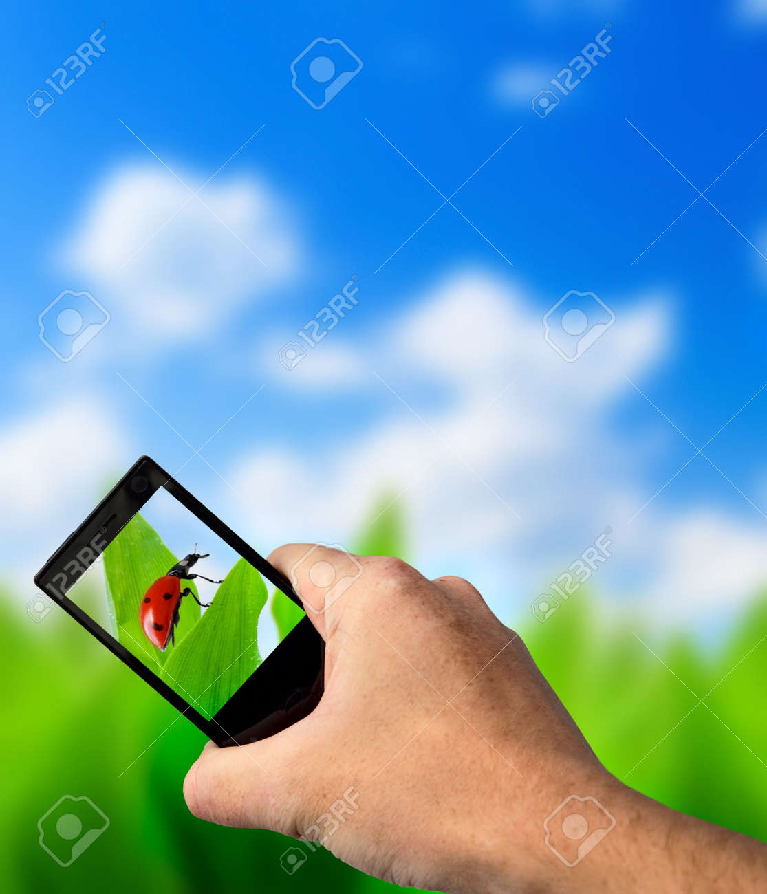green grass and perfect day Stock Photo - 5097364