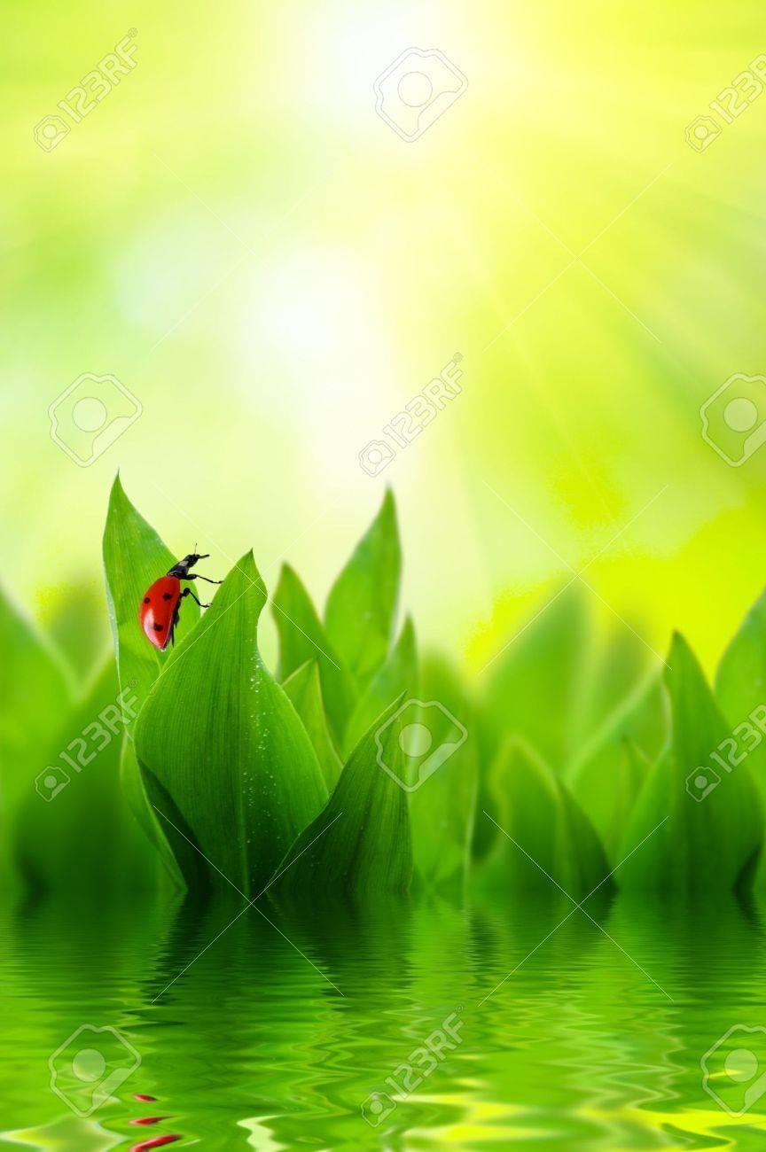 spring grass Stock Photo - 5097358
