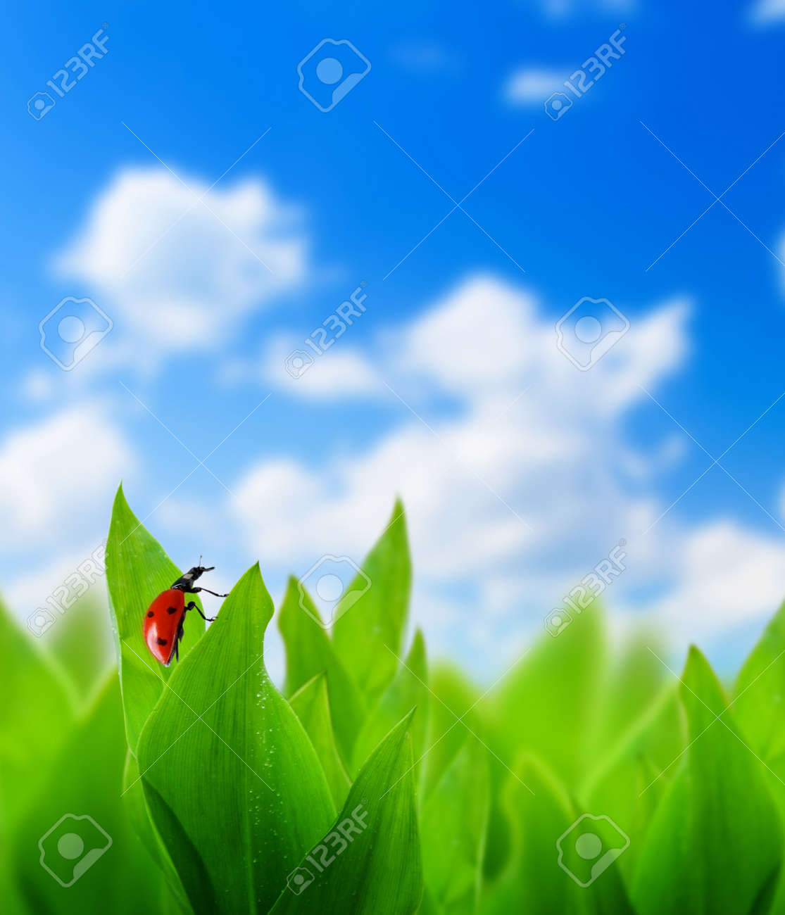 green grass and perfect day Stock Photo - 5097361