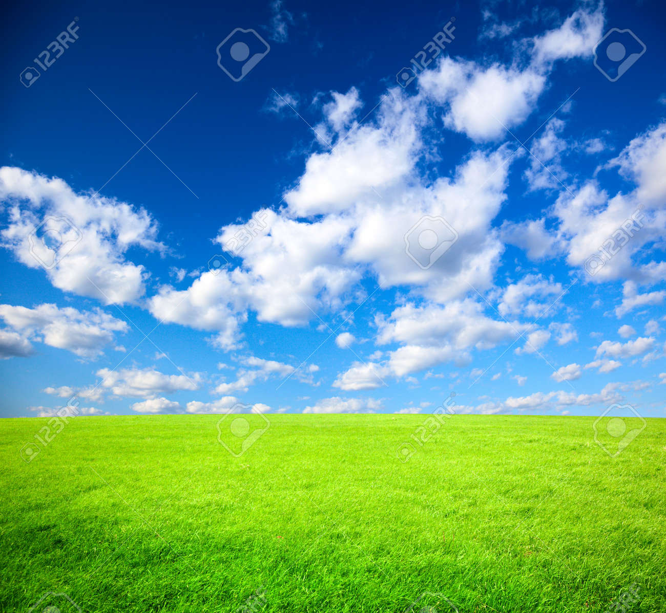 field of spring grass Stock Photo - 5190990