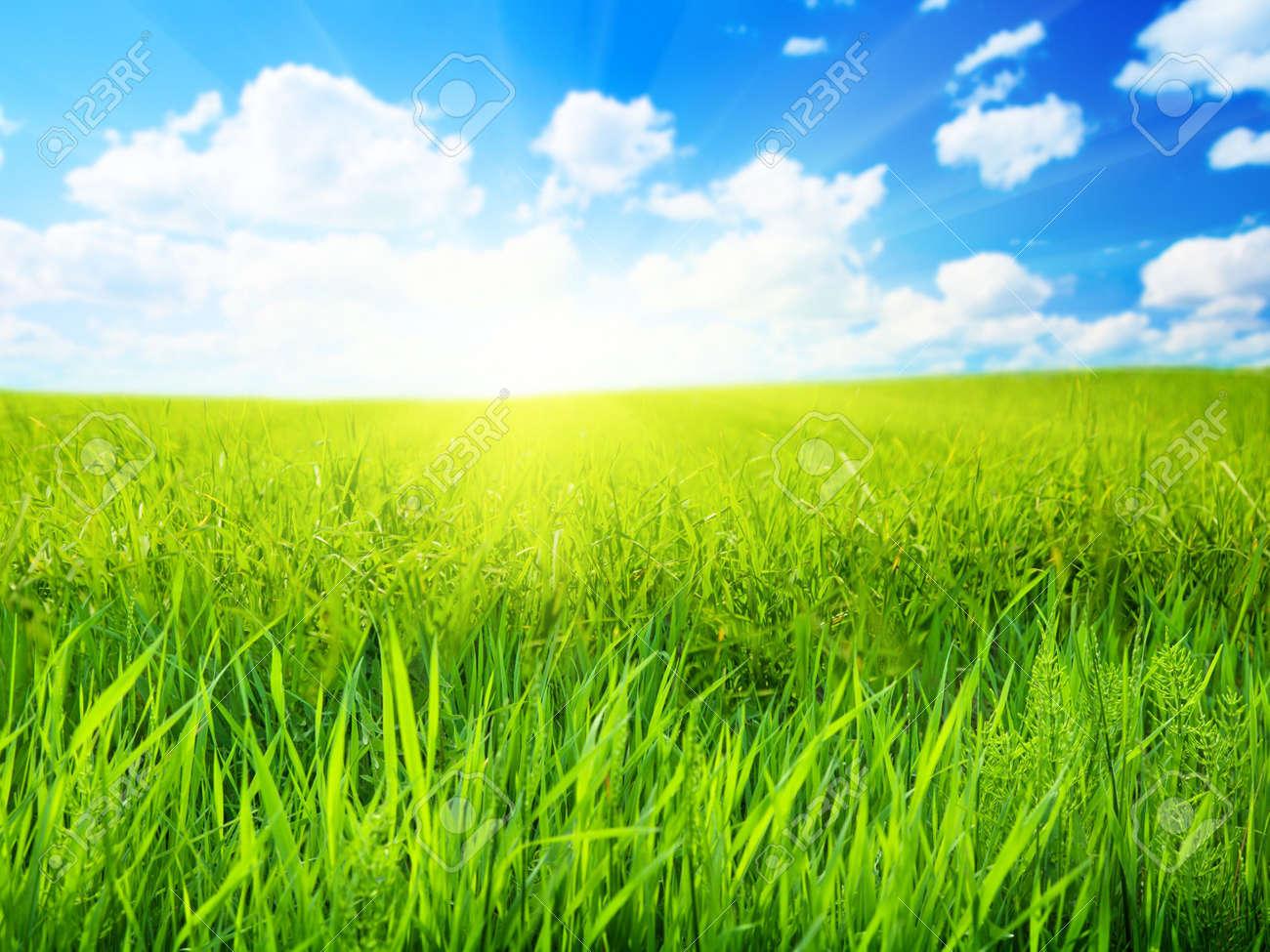 field of spring grass (shallow DOF) Stock Photo - 5224659