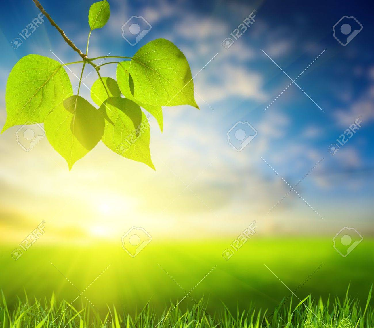 field of grass and leaves of poplar (shallow DOF) Stock Photo - 5367601